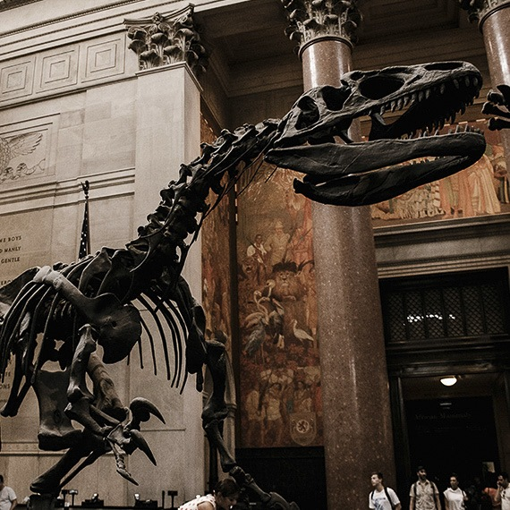 American Museum of Natural History at New York