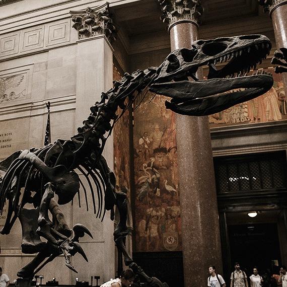 American Museum of Natural History at New York